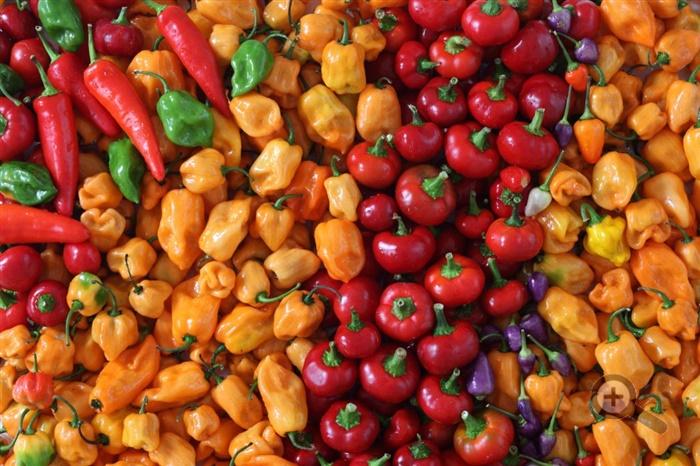potraviny-zelenina-farby-rajcina-paprika